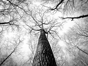 Bäume in MySQL