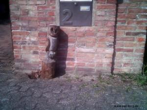 Gelegenlich lassen sich in unserer Nachbarschaft sogar Eulen beobachten.